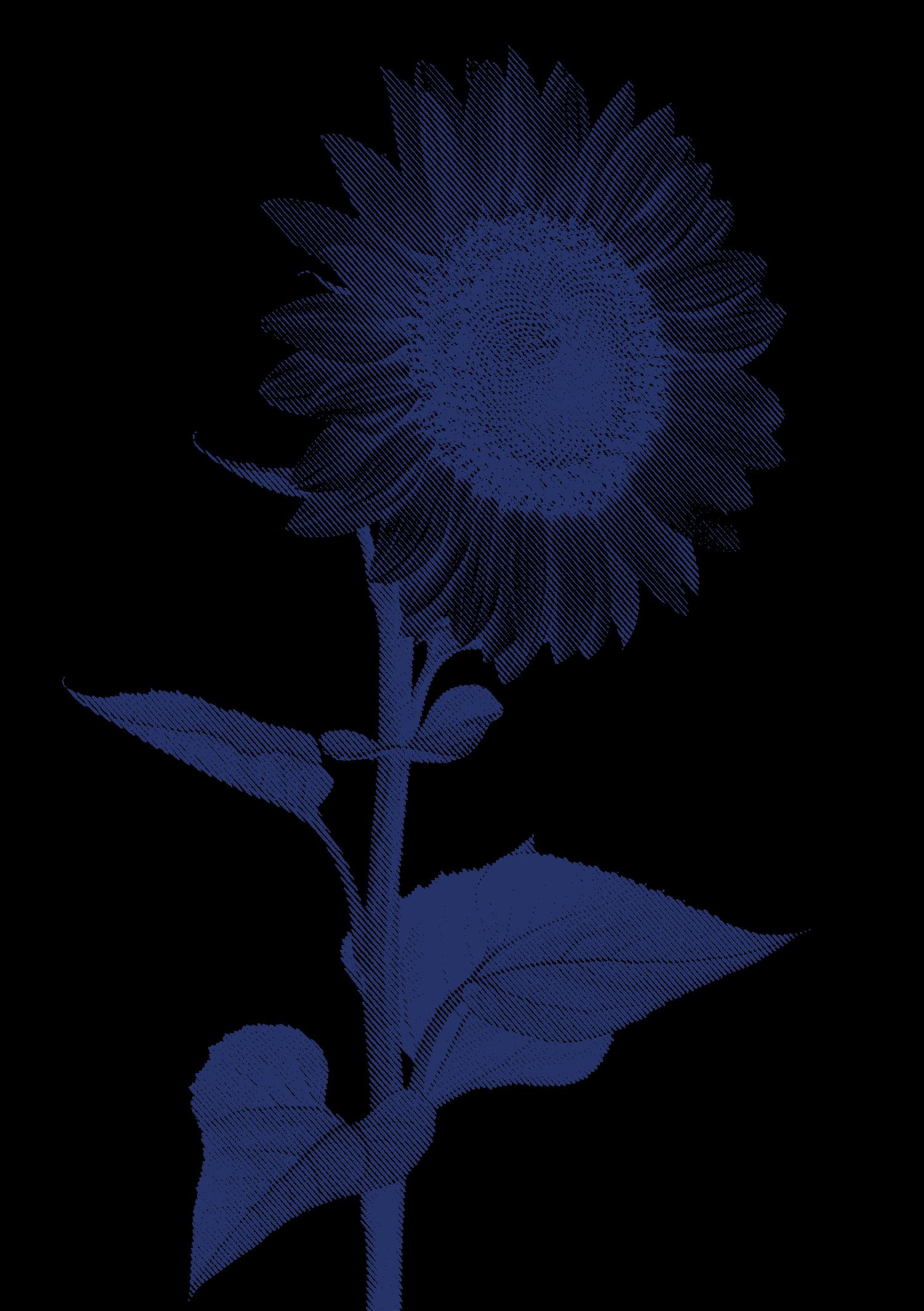 Identité visuelle Papillons de Nuit 2015